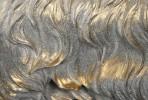 JINA - PRYDNADSHUND GOLDEN RETRIEVER I VITT & GULD