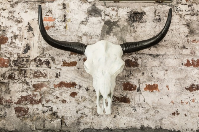 Decorative skull El Toro 70cm white black
