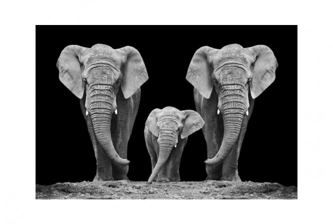 HJORD - Glastavla elefantfamilj