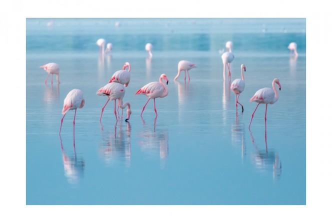 FAUX - 120x80cm Glastavla Flamingor